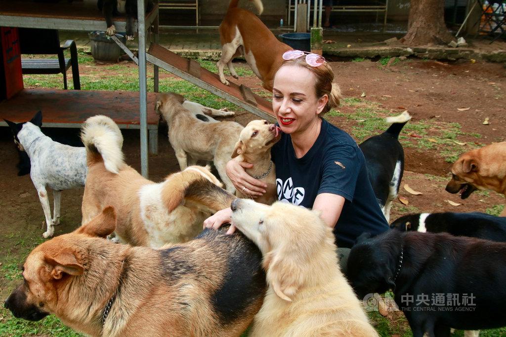 荷兰裔的佛兰肯定居雅加达,她与朋友创办的雅加达动物救援网致力救援各种动物,宣导爱护动物观念,游说印尼建立更好的保护动物机制。图为位于茂物的收容中心,安置上百只她到屠宰场救出的狗。中央社记者石秀娟茂物摄 109年9月6日