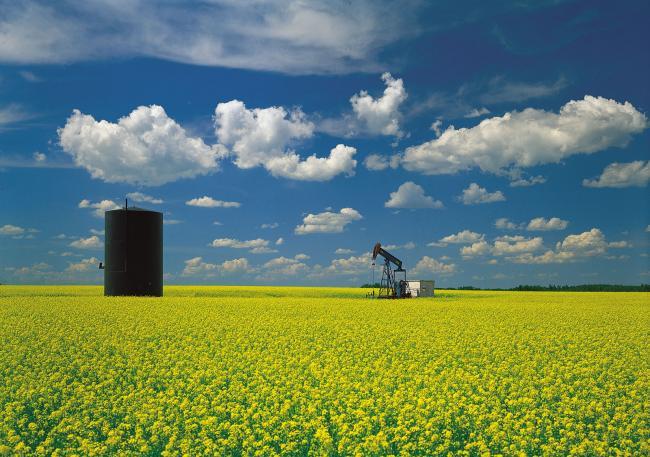 oil-well-mustard-field-Great-Plains-Saskatchewan.jpg