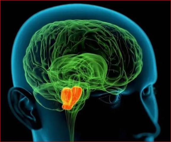 大脑中的抑郁/快乐开关被发现