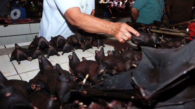 贩卖野生动物