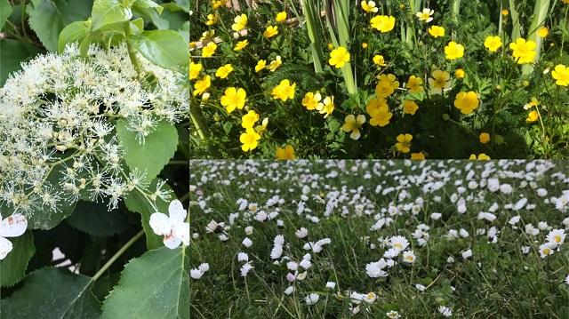 图8 - 野花.jpg