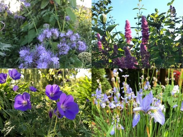 图6 - 魅惑的紫色.jpg