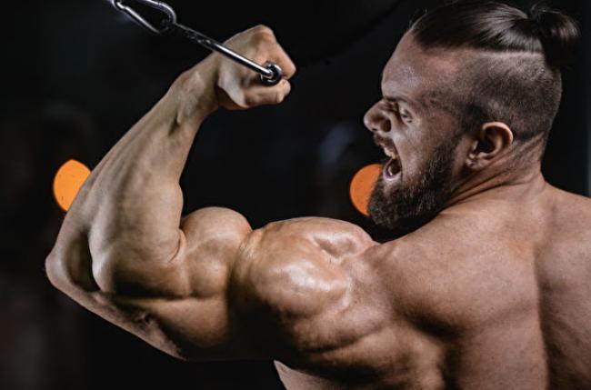 约翰・霍普金斯大学医学院研究发现:强化肌肉蛋白有碍长寿