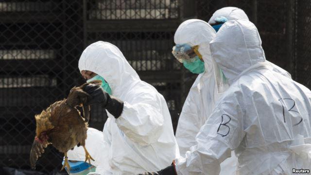 禽流感在中国有可能大范围传播