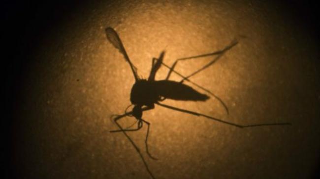 新加坡出现41例寨卡病毒当地感染病例