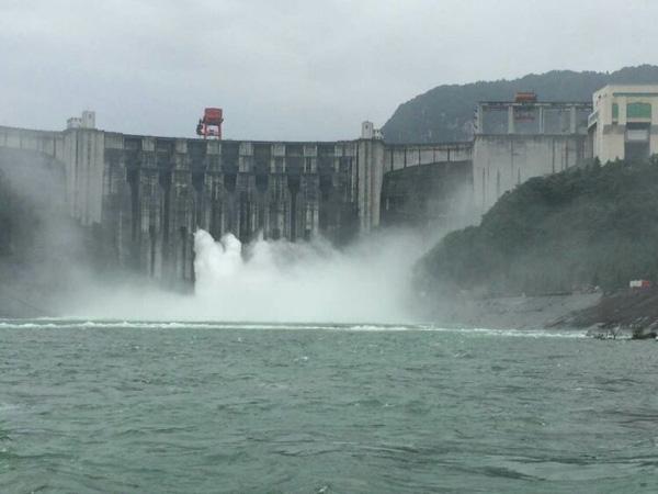 万吨肉食鲟鱼逃入长江   或与中华鲟杂交