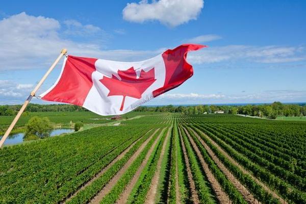 凯特王妃参观加拿大酒庄,那里有什么优质葡萄酒?