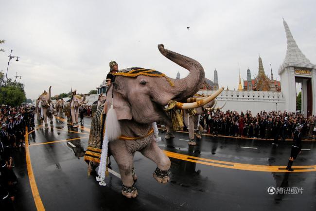 泰国大象行叩拜礼  悼念国王普密蓬