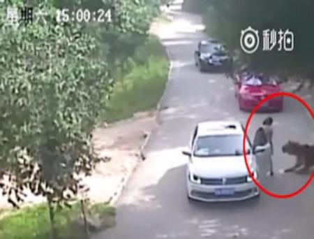 北京虎咬人事件 伤者父称不在乎骂再遭呛