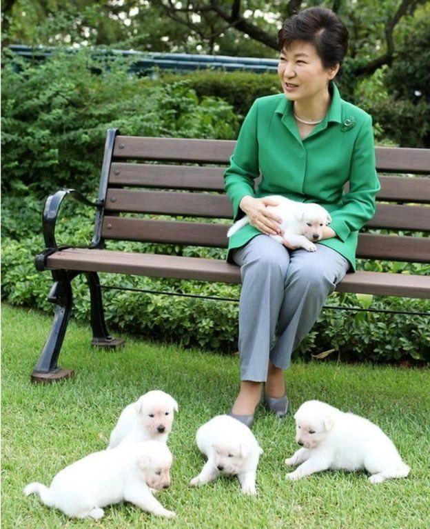 朴槿惠搬出青瓦台 谁来照顾被遗弃的狗