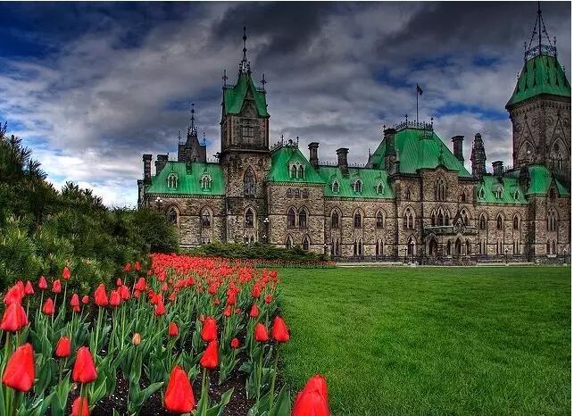 看了就想扑倒在上面 渥太华的郁金香