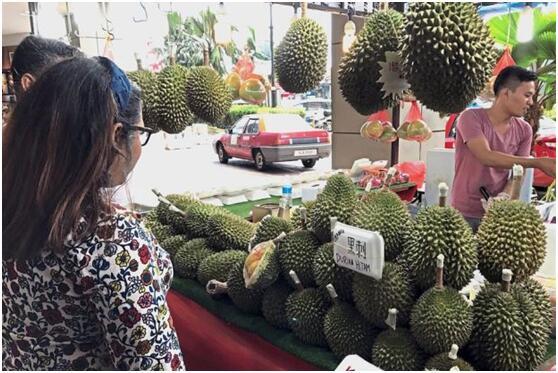 中国游客爱榴莲引发涨价 马:快买不起了