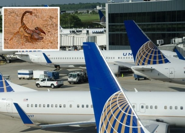 美联航蝎子从乘客衣袖爬出来  全机撤离