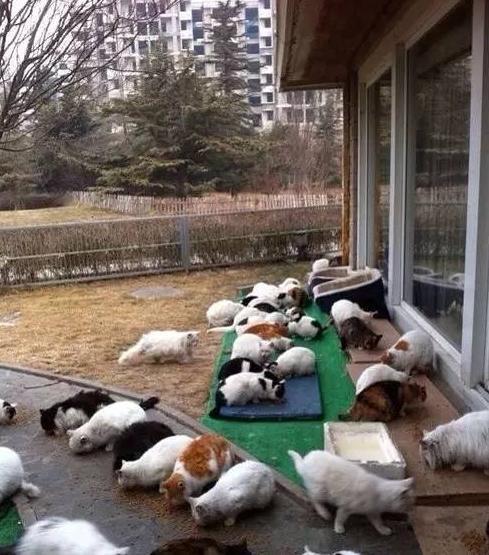 刘亦菲家后院首次曝光 养40多只猫场面壮观