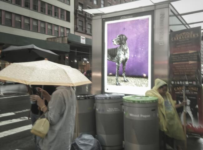NYC_Trip (16).jpg