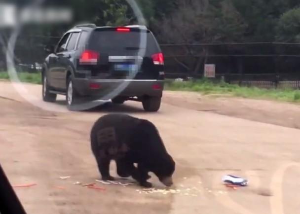 屡劝不听  自驾游动物园 开窗引熊伸爪