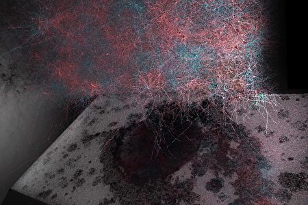 brain-nervenetwork-02-450x300.jpg