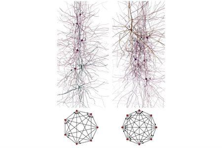 brain-nervenetwork-03-450x300.jpg
