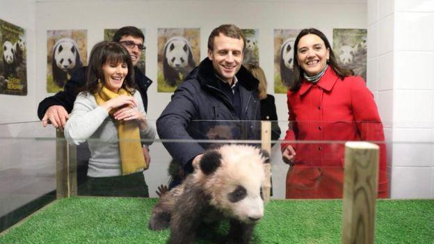 """骏马对熊猫 且看法国总统如何""""马克龙"""""""