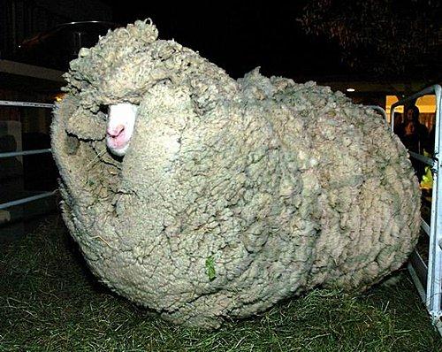 警惕!美国都收敛了 日本却还想着剪羊毛
