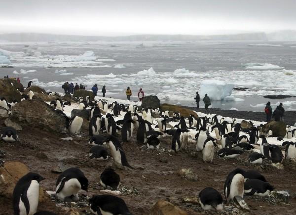中共下令!禁止国人摸企鹅 违者将有此祸
