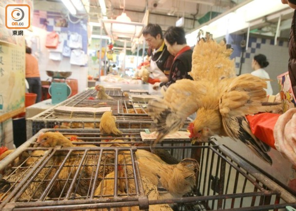 全球首宗!中国一女子染新型禽流感病毒