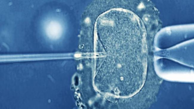 _92473492_m8020231-in_vitro_fertilization_light_microscope-spl.jpg