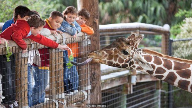 _100816706_zoos.jpg