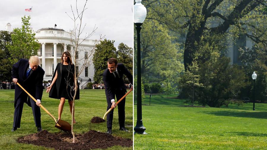 川普与马克龙种树 被网友发现神秘消失
