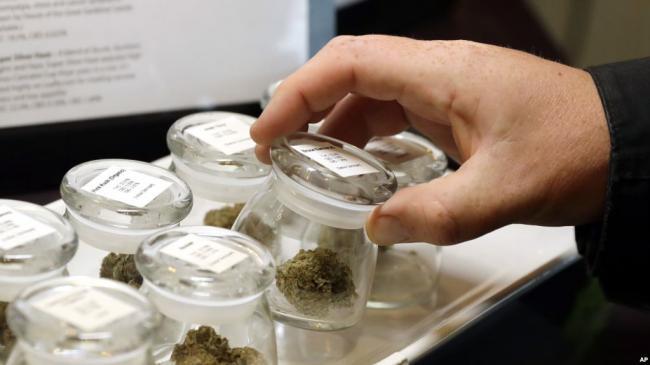 加拿大成为第二个休闲用大麻合法化国家