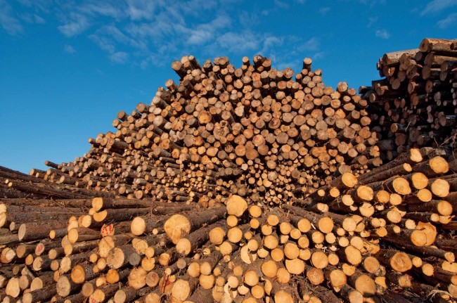 加拿大一家木材厂.jpg