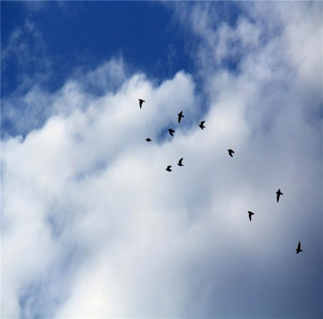 飞鸟.jpg