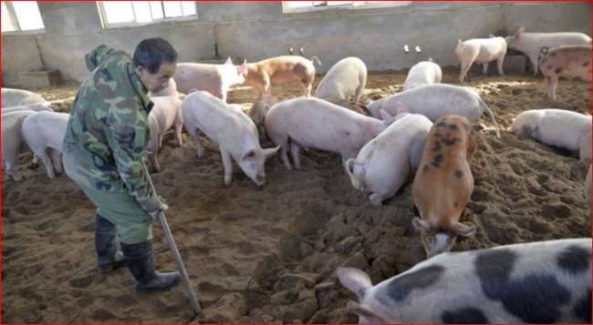 美截获一百万磅来自中国的走私猪肉