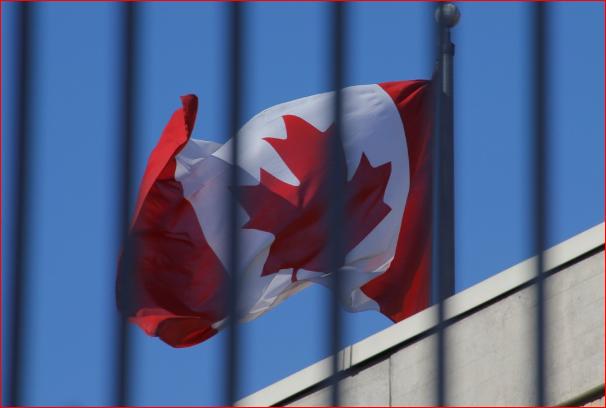 中国彻底停止采购加拿大油菜籽