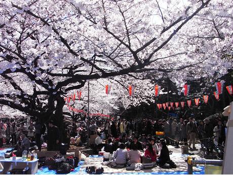 图十:樱花树下,没有陌生人.jpg