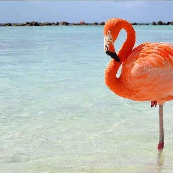 最受欢迎的大概是拥有超模等级大长腿的红鹤了!