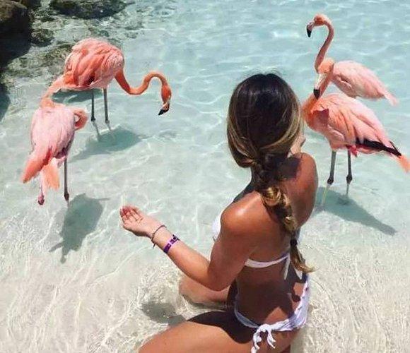 蔚蓝色的大海配着火红色的红鹤,瞬间少女心整个爆棚!