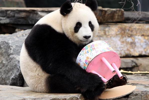 """中共""""熊猫外交""""背后的真实目的"""