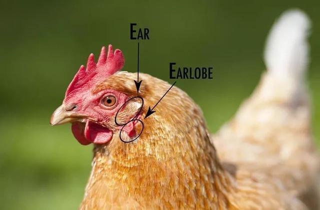EAdj6Al4K2wHaM.jpg