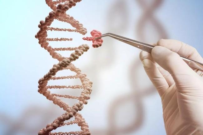 基因编辑婴儿的预期寿命低于平均值