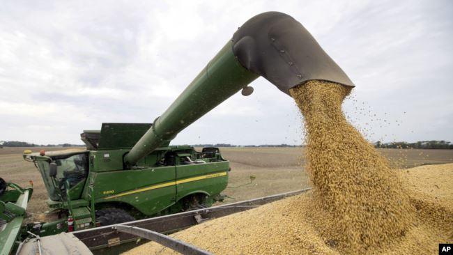 美国印第安纳州一名农民2018年9月21日在收获大豆。
