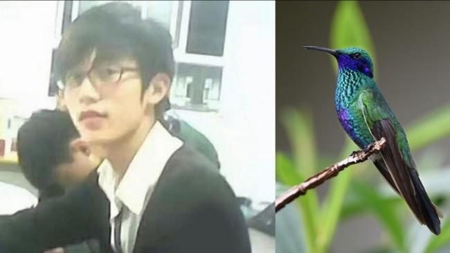 hummingbird-1823829_960_720-800x450.jpg