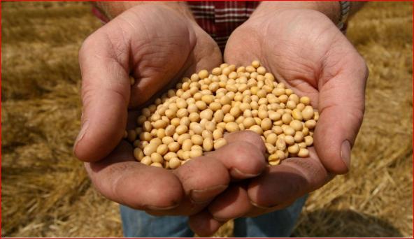 中粮采购首批4400吨俄罗斯大豆入境