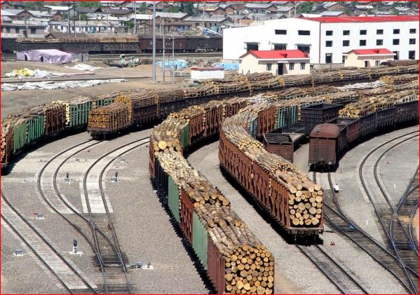 俄罗斯威胁全面禁止出口木材 北京罕见支持