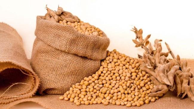 路透社:中国仍在偷买美大豆