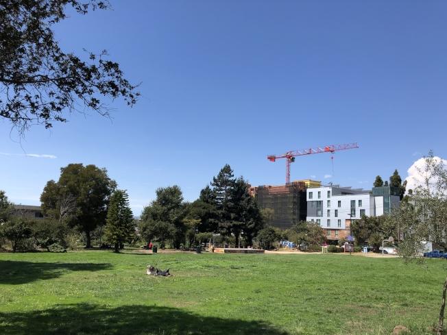 柏克莱加大将在人民公园建造容纳1000个床位的学生宿舍,另外打造包含75到125户支援性住房,供游民居住。(记者刘先进/摄影)