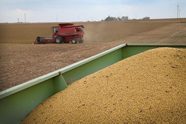 贸易谈判后中共从巴西买豆 美国没接到订单