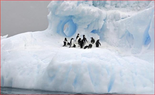 中俄再联手 南极海洋保护区流产