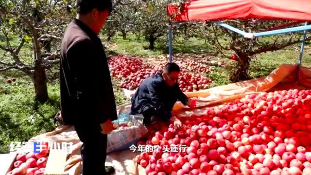 合作社收苹果