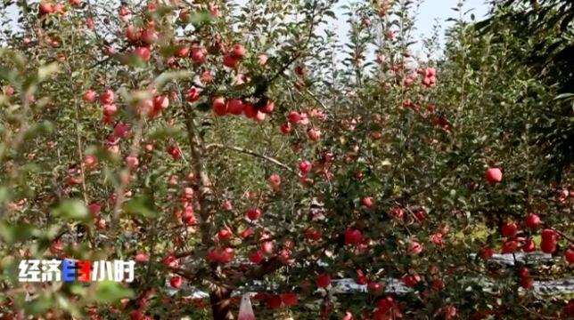 康博学家的果树